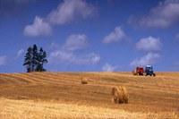 14/05/2010 - Rapporto sul sistema agroalimentare 2009