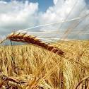 Rapporto sull'agricoltura parmense